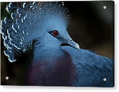 Acrylic Print featuring the photograph Victorian Crowned Pigeon by JT Lewis