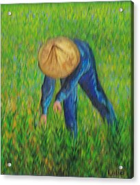 Vietnamese Rice Planter  Acrylic Print by Lore Rossi