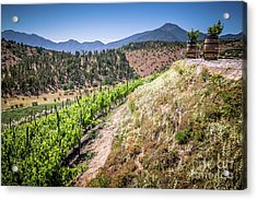View Of The Vineyard. Winery In Casablanca, Chile. Acrylic Print by Anna Soelberg