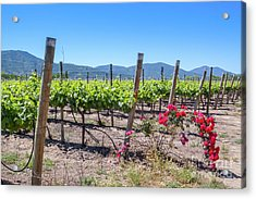 View From The Winery With The Roses, Casablanca, Chile Acrylic Print by Anna Soelberg