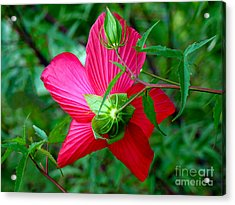 Acrylic Print featuring the photograph View From Underneath by Sue Melvin