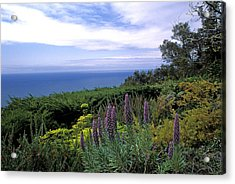 View From Ventana Big Sur Acrylic Print by Kathy Yates