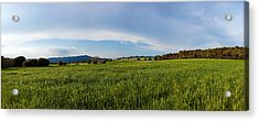 View Of A Field, Santa Eulalia De Acrylic Print by Panoramic Images