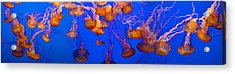 View Of Jelly Fish Underwater Acrylic Print by Panoramic Images