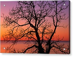 View Of Ocean Through Silhouetted Tree Acrylic Print by Panoramic Images