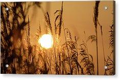 View Of Sun Setting Behind Long Grass B Acrylic Print