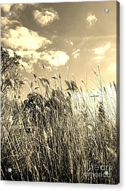 View Of The Field Mouse - Sepia Acrylic Print
