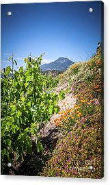 Vineyard View With Flowers, Winery In Casablanca, Chile Acrylic Print by Anna Soelberg