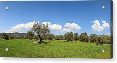 View Of Trees In A Field, Santa Eulalia Acrylic Print by Panoramic Images