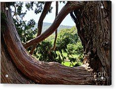 View Through The Tree Acrylic Print