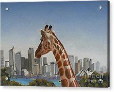 View Towards Sydney Acrylic Print by Louise Green