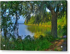 View Under The Spanish Moss Acrylic Print by Brian Wright