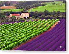 Vignes Et Lavande Acrylic Print