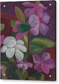 Vinca Major Acrylic Print
