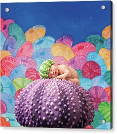 Vince As A Sea Urchin Acrylic Print by Anne Geddes
