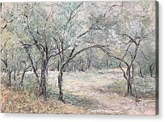Vincents Olive Trees 2 Acrylic Print
