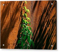 Contrast Acrylic Print by Brian Manfra