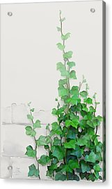 Acrylic Print featuring the painting Vines By The Wall by Ivana