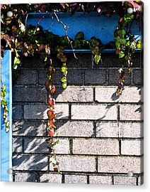 Vines On Blue Acrylic Print by Gary Everson