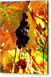 Vineyard 20 Acrylic Print by Xueling Zou