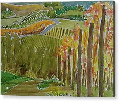 Vineyard And Cultivated Fields Acrylic Print by Janet Butler