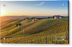Vineyard At Barbaresco, Italy Acrylic Print