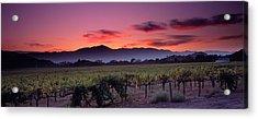 Vineyard At Sunset, Napa Valley Acrylic Print by Panoramic Images