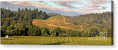 Vineyard In Dry Creek Valley, Sonoma County, California Acrylic Print