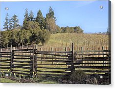 Vineyard In The Spring Acrylic Print