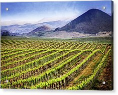 Acrylic Print featuring the photograph Vineyard by Scott Kemper