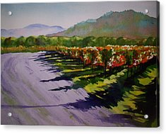 Vineyard Shadows Acrylic Print by Becky Chappell