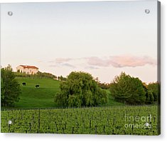 Vineyard Acrylic Print by Yurix Sardinelly