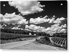 Acrylic Print featuring the photograph Vineyards In Summer II by Steven Ainsworth