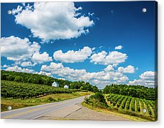 Vineyards In Summer Acrylic Print by Steven Ainsworth