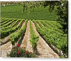 Vineyards In The Galilee 2 Acrylic Print by Arik Baltinester