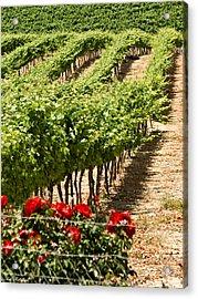 Vineyards In The Galilee  4 Acrylic Print by Arik Baltinester