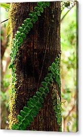 Vining Fern On Sierra Palm Tree Acrylic Print by Thomas R Fletcher