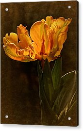 Acrylic Print featuring the photograph Vintage 2017 Tulip by Richard Cummings