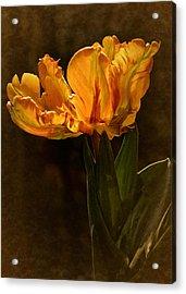 Vintage 2017 Tulip Acrylic Print