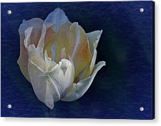 Vintage April 2017 Tulip Acrylic Print by Richard Cummings