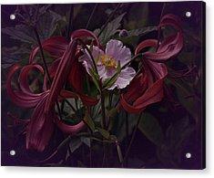 Vintage Asiatic Lilies  Acrylic Print