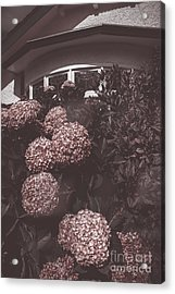 Vintage Bayview Window Surrounded By Red Flowers Acrylic Print