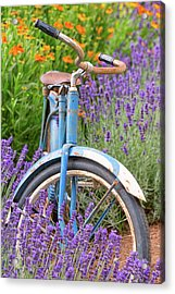 Acrylic Print featuring the photograph Vintage Bike In Lavender by Patricia Davidson