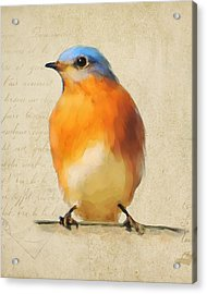 Vintage Bluebird Acrylic Print