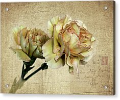 Vintage Carnations Acrylic Print by Judy Vincent