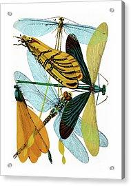 Vintage Dragonflies, Damselflies Etomology Illustration Acrylic Print by Tina Lavoie