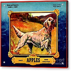 Vintage English Setter Apples Advertisement Acrylic Print by Peter Gumaer Ogden