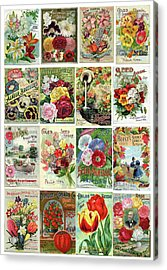 Vintage Flower Seed Packets 1 Acrylic Print by Peggy Collins