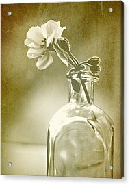 Vintage Geranium Acrylic Print by Amy Neal
