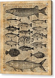 Vintage Illustration Of Fishes Over Old Book Page Dictionary Art Collage Acrylic Print by Jacob Kuch
